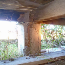 Old termite activity